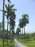 Avenida las Palmas, Cienfuegos