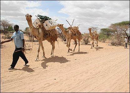 libros en camello 1