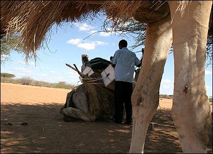 Libros en Camello 8