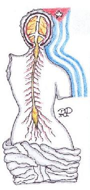 Simposio Neurocirugía  Vascular FLANC