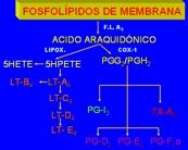 Fosfol�pidos de membrana
